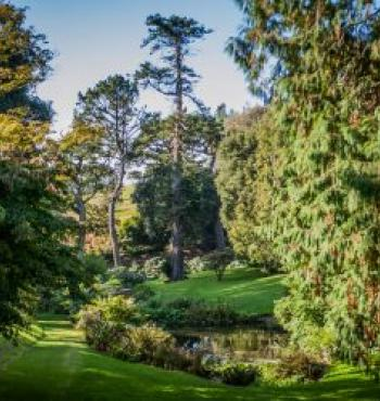 Tregothnan Charity Open Days